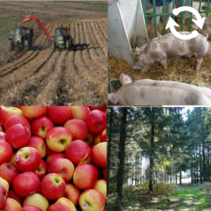 Images évoquant l'agriculture et l'expoitation forestière en Belgique