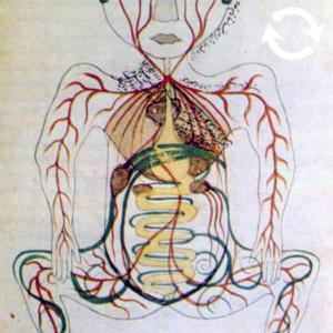 Dessin des veines à l'intérieur du corps humain