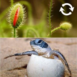 Image d'une plante et d'un bébé tortue qui sort de son oeuf
