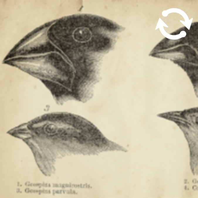 Dessins de têtes d'oiseaux