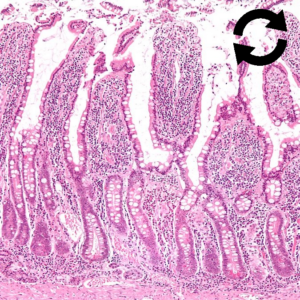 Métabolisme digestif