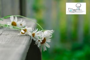 Fleurs fanées sur un banc